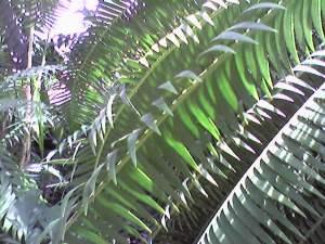 Tropic Palms 3