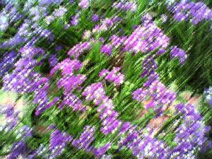 rushing flowers